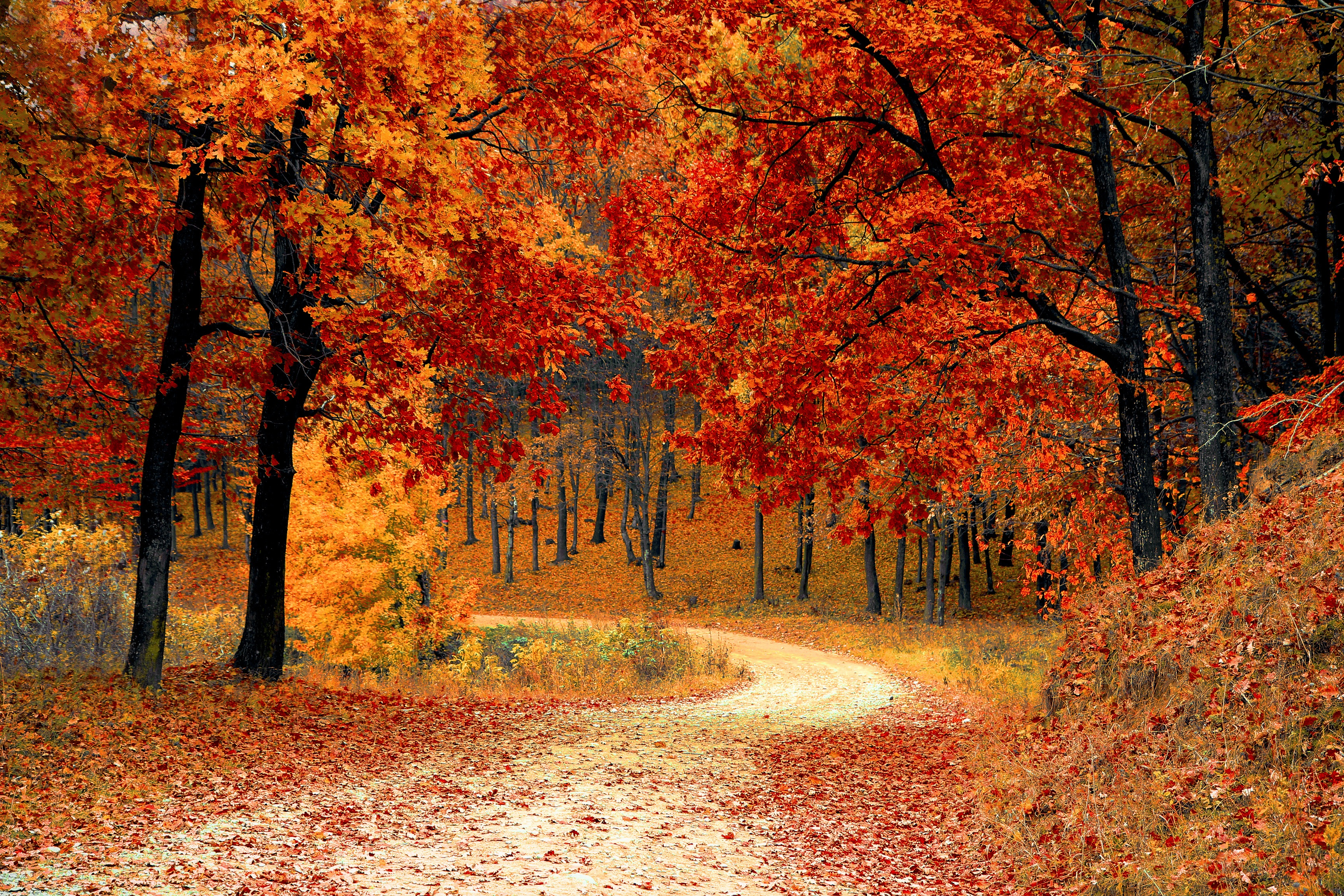 Fall for these Autumn safety tips